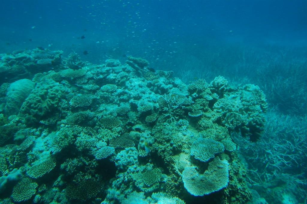 Australia / Great Barrier Reef / Green Island - 04