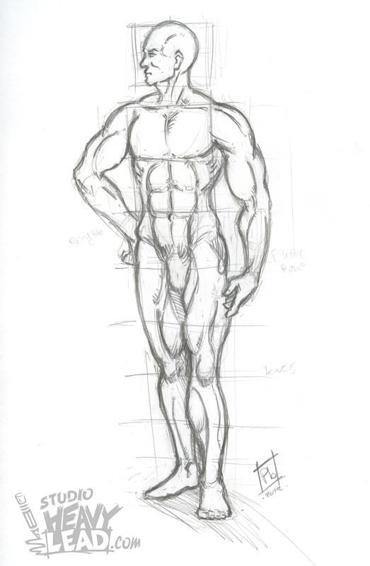 Burne Hogarth Anatomy Styudy 1 Anatomy Study From Burne Ho Flickr
