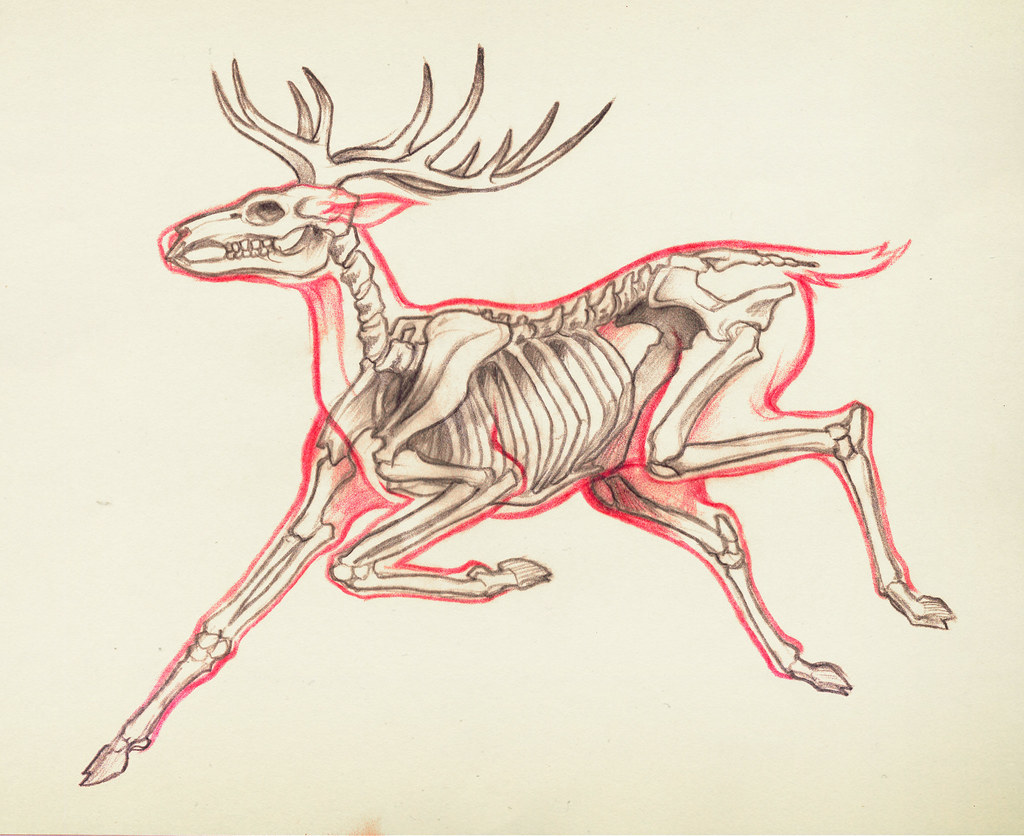 Colorful Anatomy Of Deer Model - Physiology Of Human Body Images ...