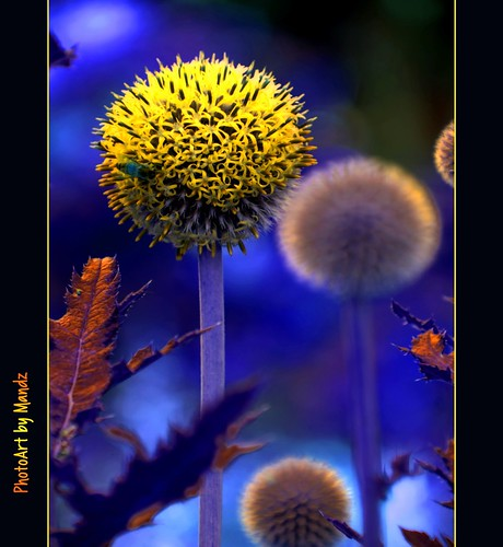 flowers from mars - the bee is from venus | by PhotoArt Images