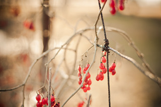 Berries in Winter | by Tina M89