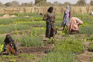 Chad Food Crisis: a market garden helps provide income and food security | by Oxfam International