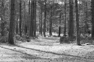 Moors Valley Country Park 2 | by Kevin Browne Photography