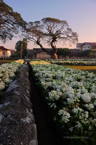 Paoay Church Garden [Explored] | by Meljoe San Diego