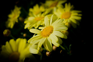 Yellow Flower | by Brandon Schabel