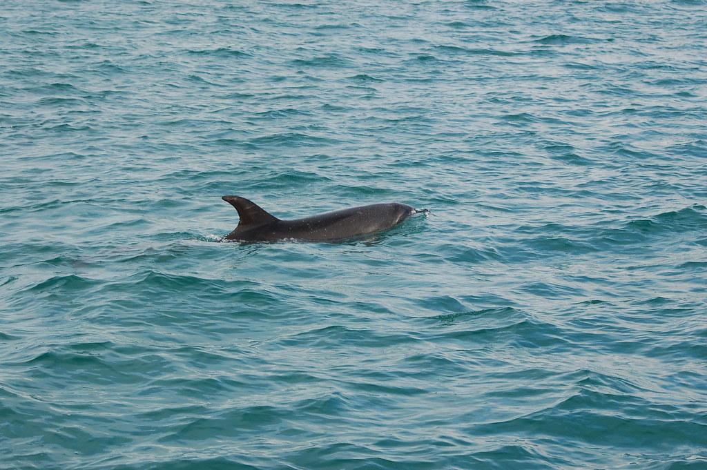 2009 Jan NZ Dolphins 022