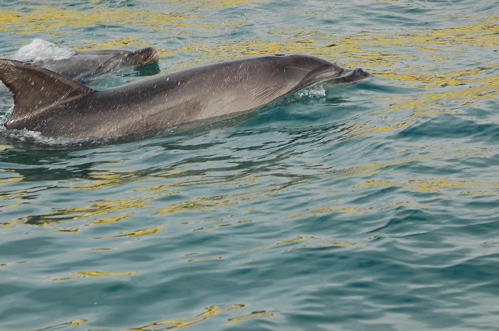 2009 Jan NZ Dolphins 044