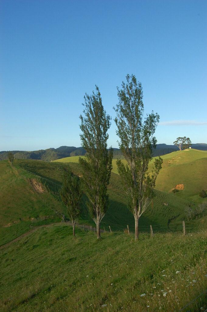 2009 Jan NZ Far North 105
