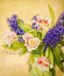 Scalloped Tulips With Lilac | by *GloriousNature*bySusanGaryPhotography