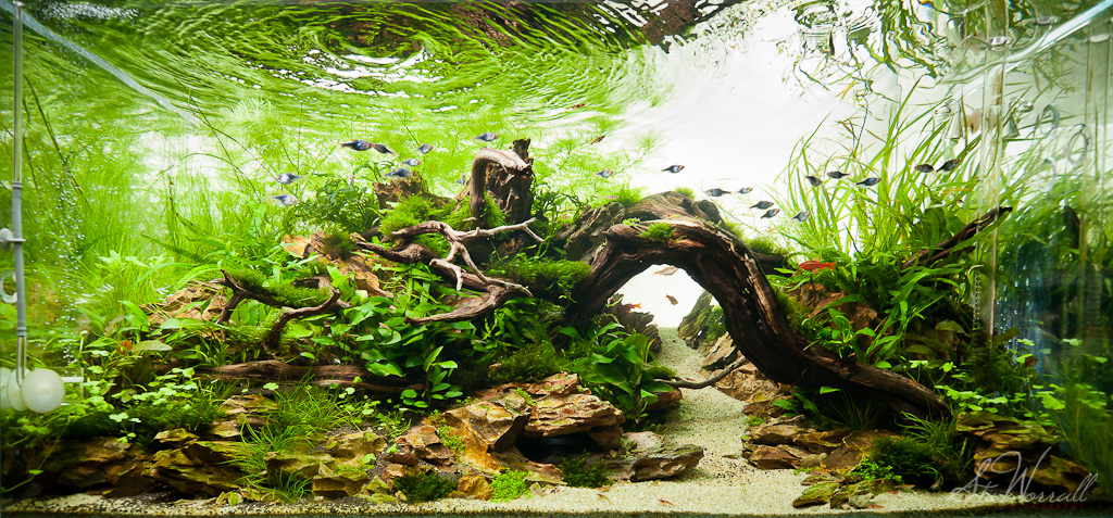 Charmant ... 90x45x45cm Planted Dragon Stone Aquascape | By Stu Worrall Photography