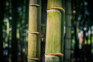 Bamboo - 竹 | by kirainet