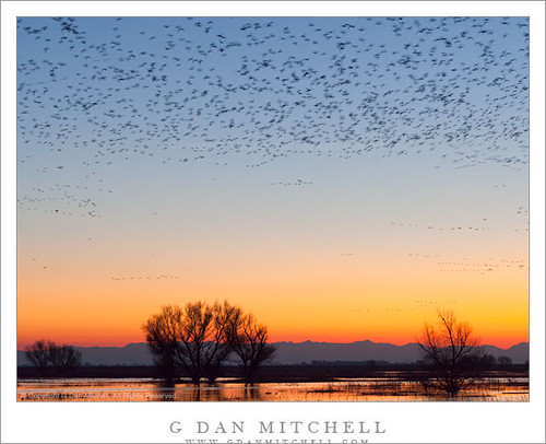 Bird-Filled Dusk Sky, Central Valley | by G Dan Mitchell