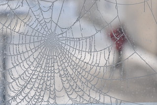 Captured in a winter's web... | by Julka2009...(mostly off)