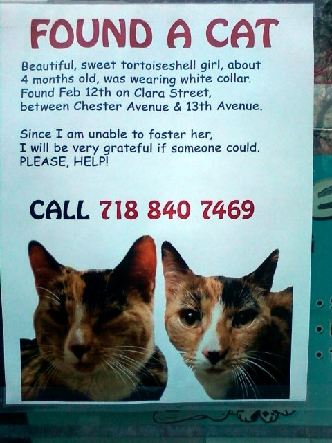 found a cat flyer brooklyn ny by emilyg
