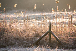 On a cold and frosty morning .. | by Sue Nicholson