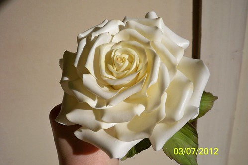 Cream Rose | by meriem bens