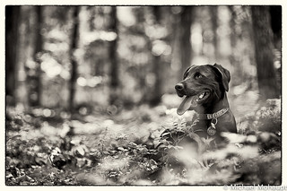 Lila on the Blue Ridge Parkway | by Mohaupt Photo