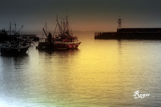 Safe in Harbour | by Roger's Photos59