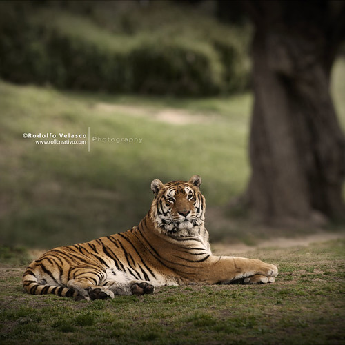 TIGRE explore | by OlphoMadrid