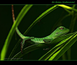go green | by aries_d