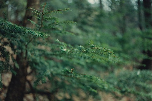 Evergreen | by Wild Kindness