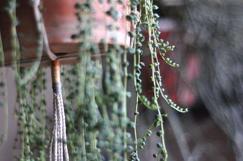 made some rope and thread plant hangers the other day | by flypeterfly