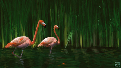Flamingos | by Gustavo Paim