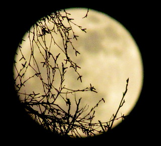 The moon peeks through the trees. | by Mistygoth (Tracy Woosey)