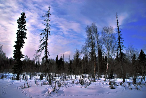 Alaska Anchorage Pink Snow | by MarculescuEugenIancuD5200Alaska