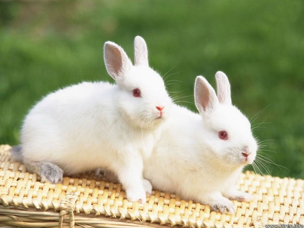 rabbits | godzilladoi | Flickr