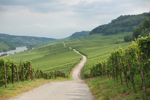 Luxembourg vineyards | by kewl