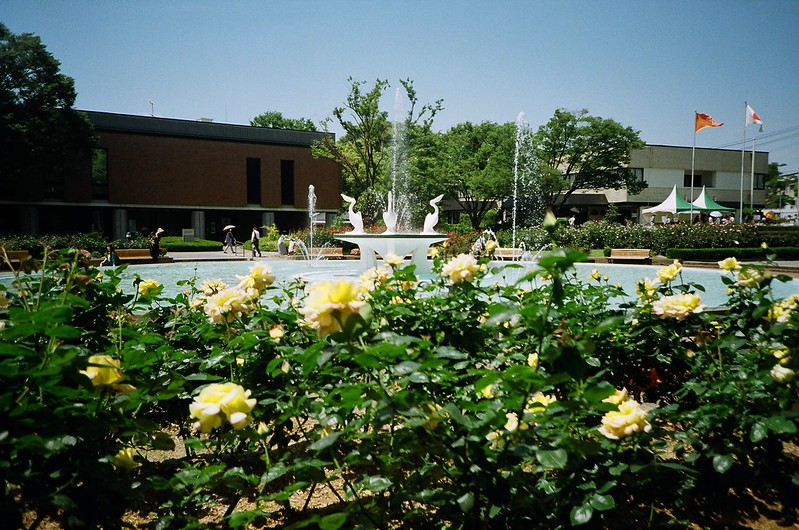 lomography: roses