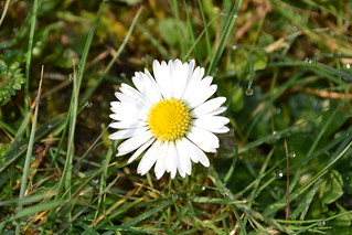 march daisy | by ELH 10