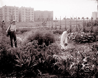 War Gardens Jackson Heights. Queens, New York City, 1918. | by JFGryphon