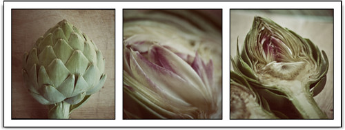 Artichoke strip 1 | by doodahlin