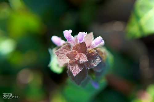 HBW! - Just B-weed-iful | by ∞ RedLoop ∞