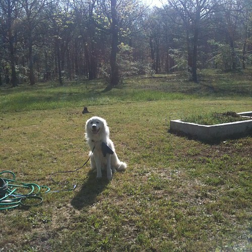 Shiloh, my gardening companion | by Life With Dee