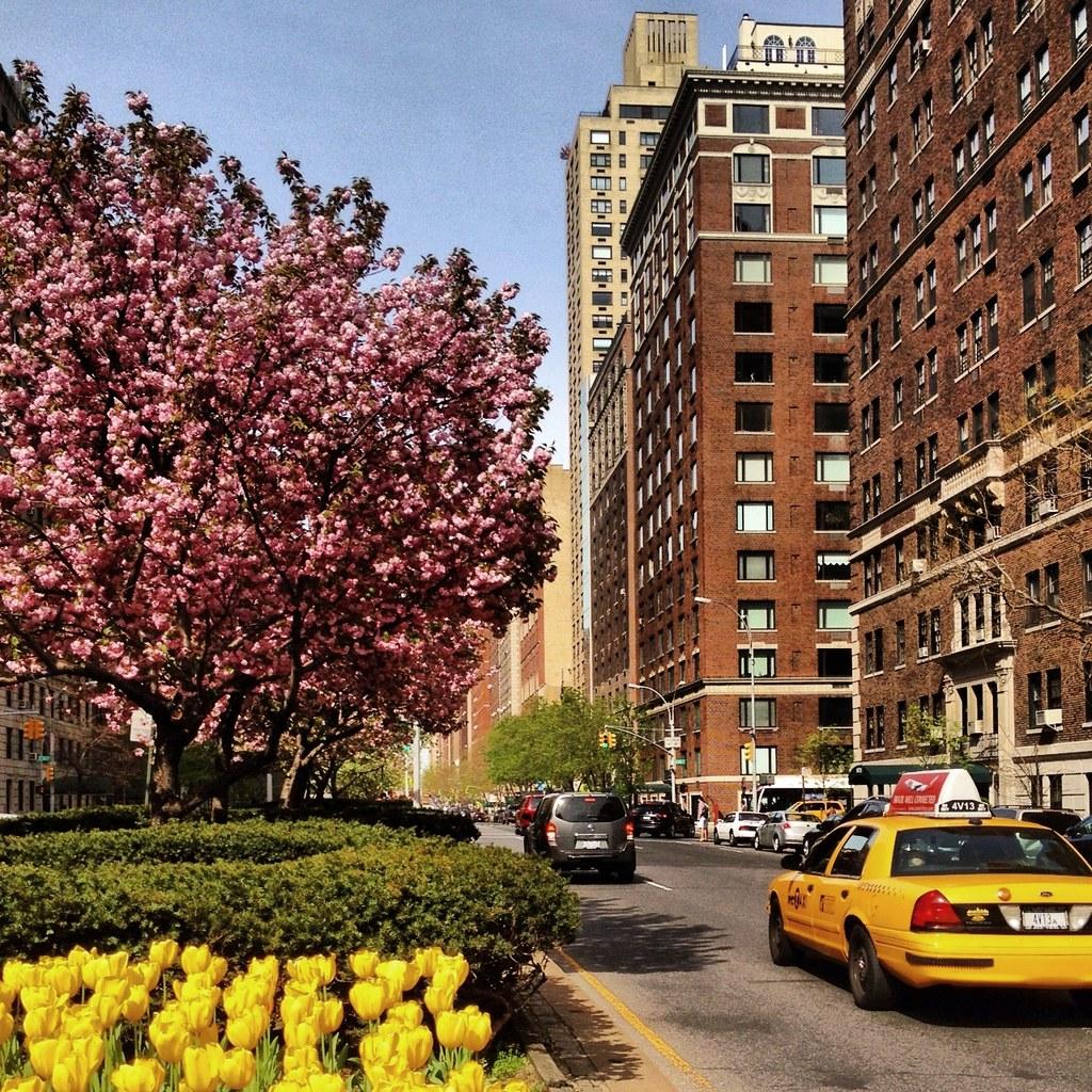Spring Blossoms Along Park Avenue - Upper East Side - New … | Flickr
