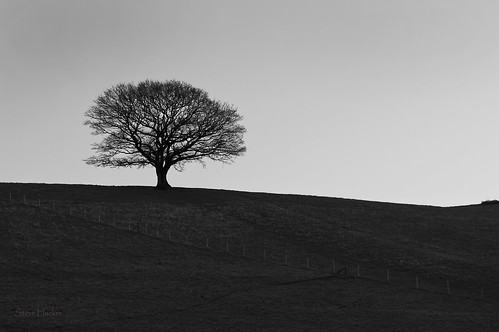 One Tree | by parallax.