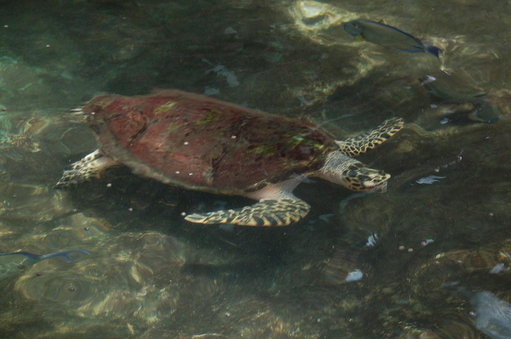 Australia / Great Barrier Reef / Green Island - 09