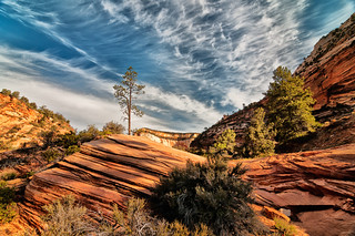 lone tree hill in Zion National Park 04-2012 | by Thanks for 2.2M views!