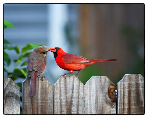 The Courtship - Explore #281 | by Denise Trocio (D Trocio Photography)