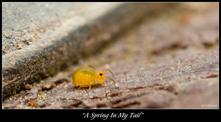~A Spring In My Tail~ | by Eddie The Bugman