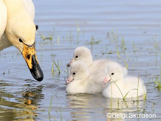 Mothering | by Helgi Skulason photographer