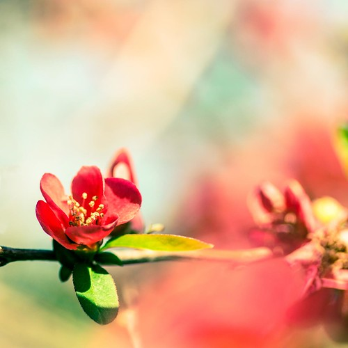les couleurs du printemps the colours of spring flickr. Black Bedroom Furniture Sets. Home Design Ideas