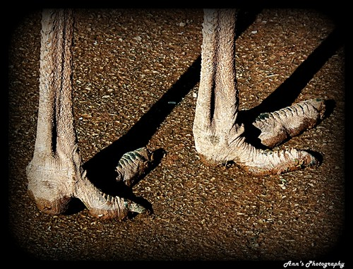 Who walks with feet like these? | by mancunian61