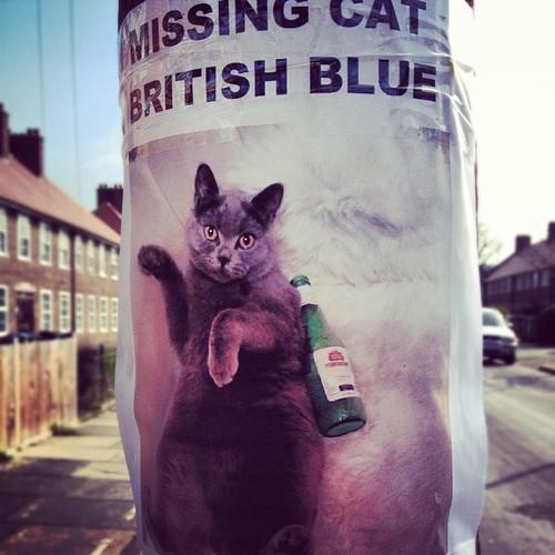 White Cat Missing St Dorothee