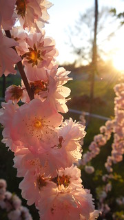 Spring Sunset | by Nesasio