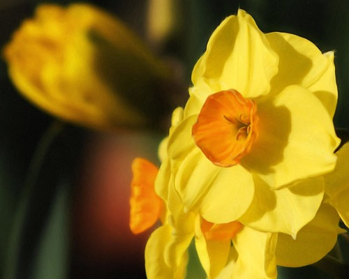 Daffy - A PhotoPainting | by TheNewJane