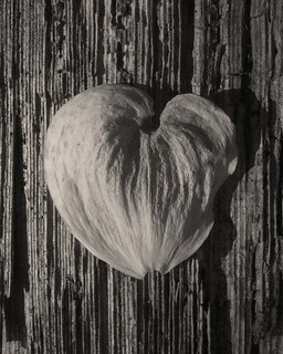 Heart Desiccated... | by Sea Moon